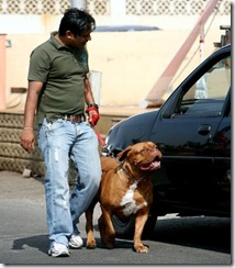 salman khan and dog