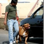 Salman Khan's pet dog Myjaan in Hospital